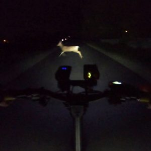 I Almost Hit a Deer! Kaabo Mantis Midnight Ride